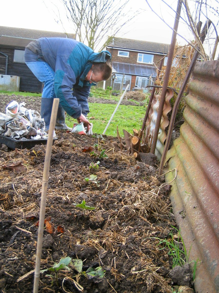 Jan's Allotment Jobs for February