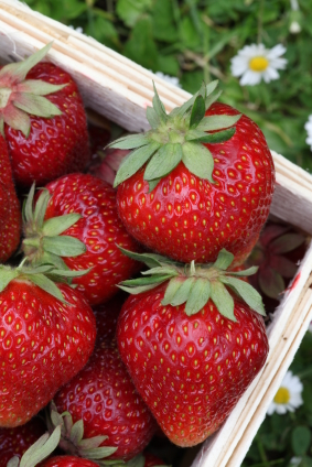 strawberries -  one of the tastiest crops on the plot