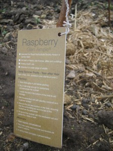 cost to get started on an allotment