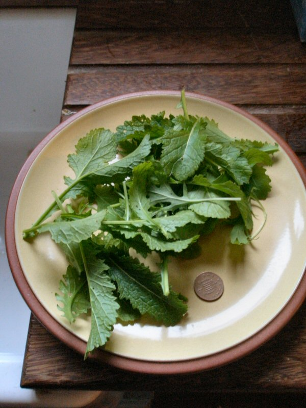 one penny salad