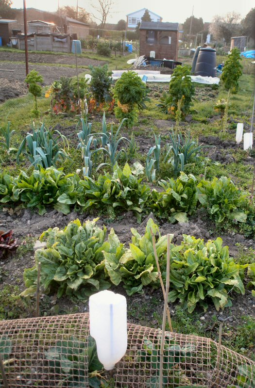 clearing the winter veg