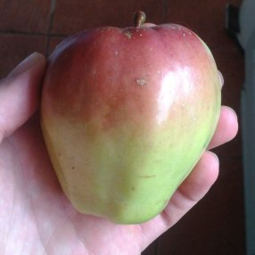 foraged apple