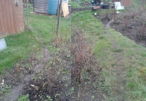 who is trampling across my allotment