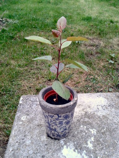 very own fruit trees