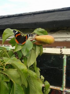 my weekend with butterflies