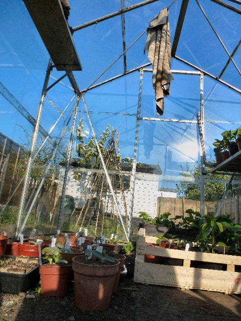 beginner's tips for greenhouse growing