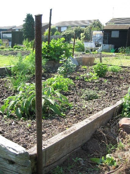 reasons to use raised beds for veg growing