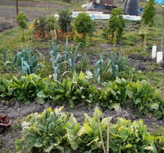 tips for looking after common winter veg