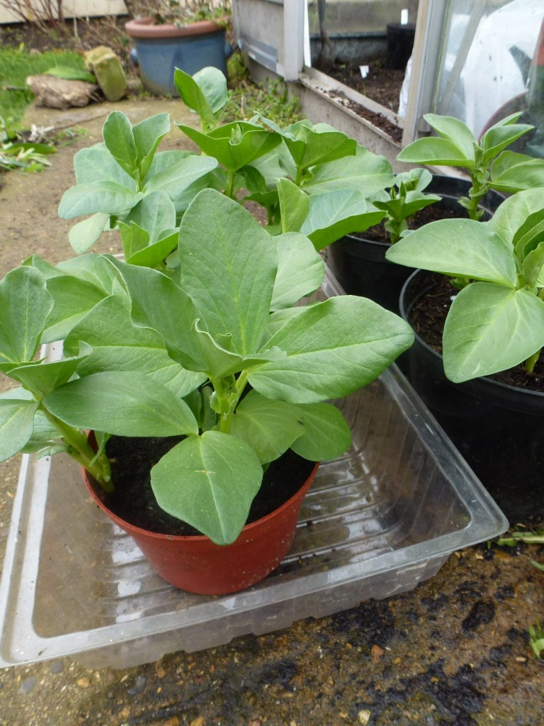 tips for sowing in pots