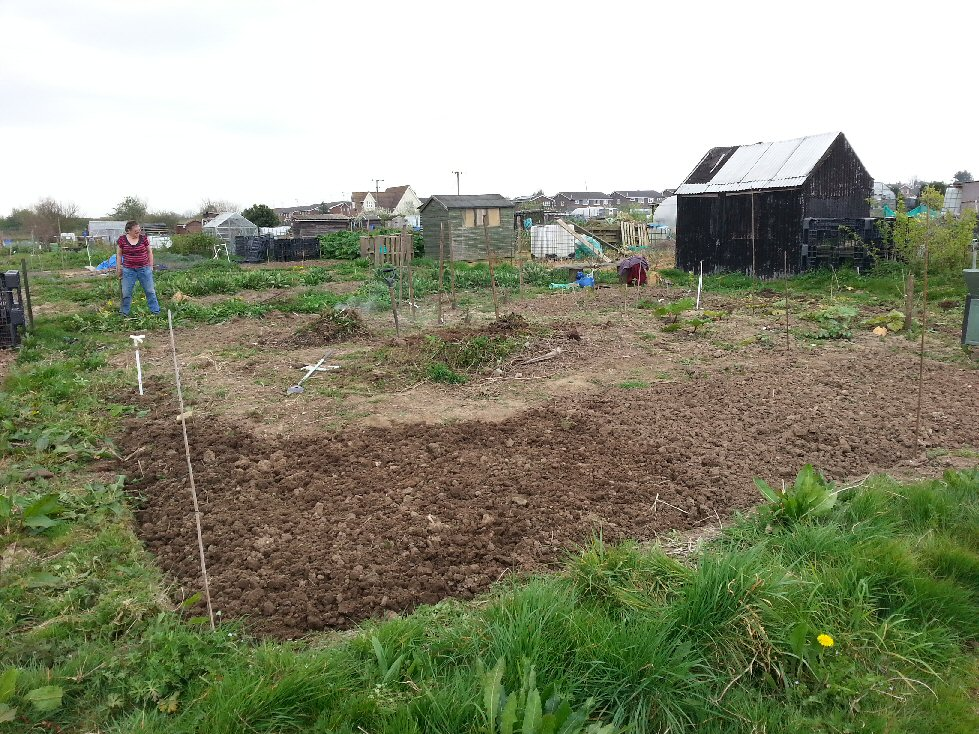 how we cleared our overgrown allotment