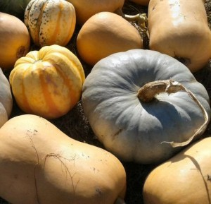 why I love growing squashes