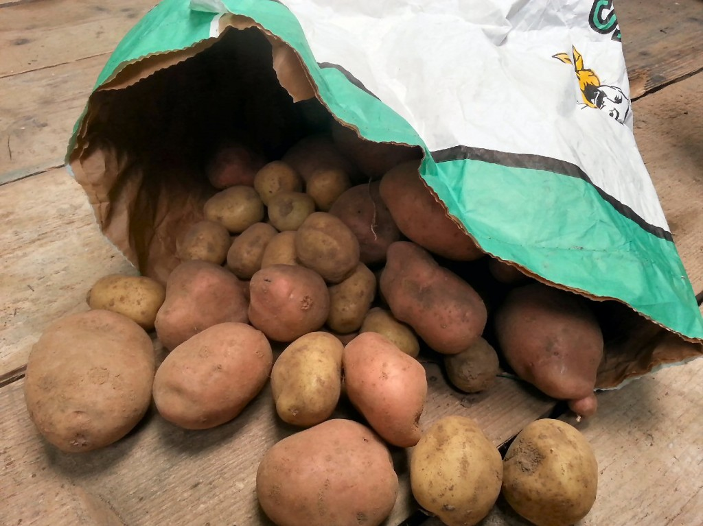 tips for storing potatoes on the allotment