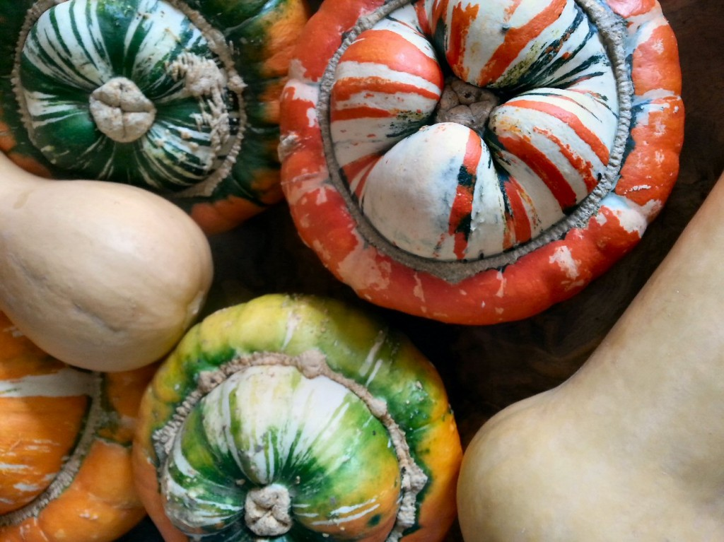 growing turk's turban squashes