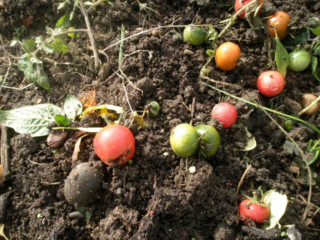 allotment jobs for early winter