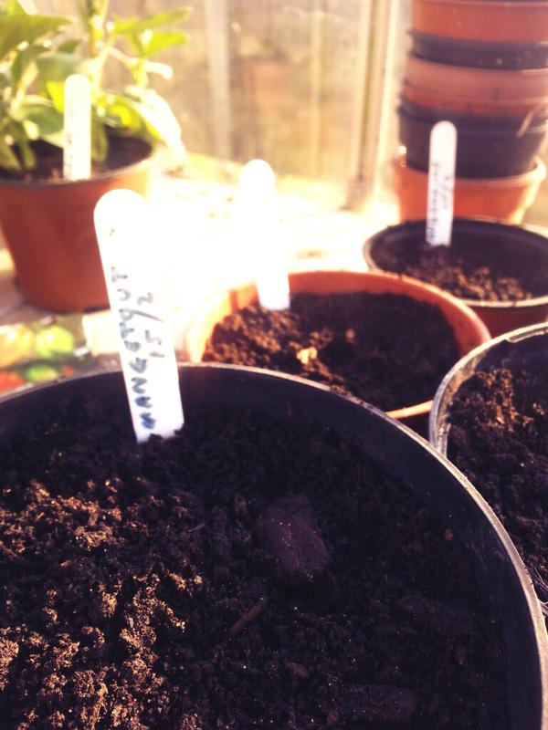 sowing my first seeds of the year