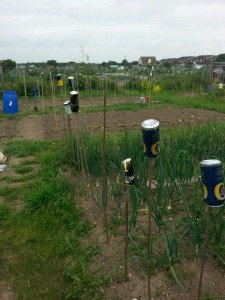common household objects to reuse on the allotment