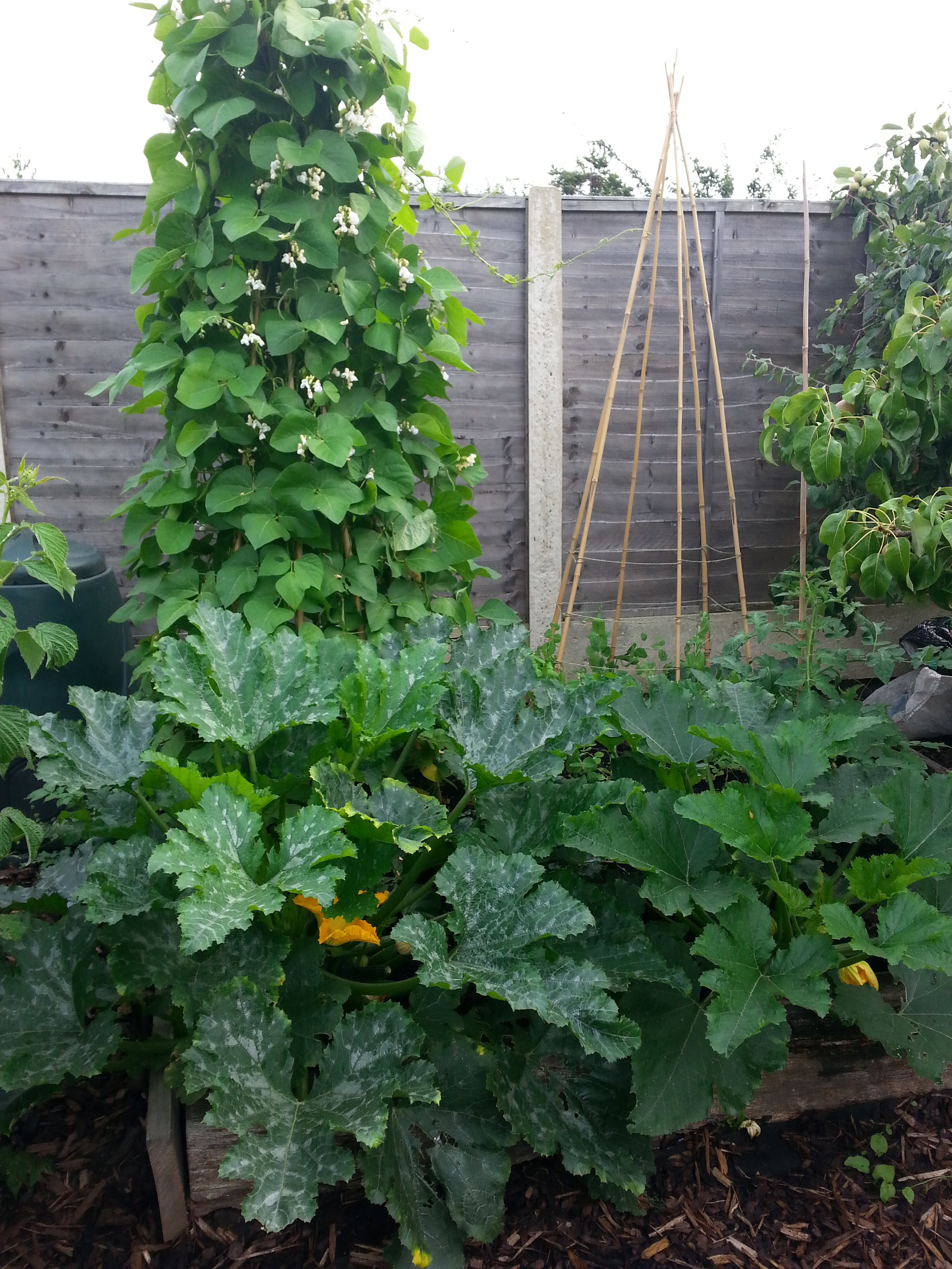 6 things i ve learnt from growing vegetables in a small space real men sow - Growing vegetables in a small space concept ...