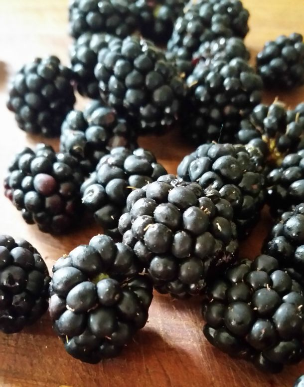 how I grew to love cultivated blackberries