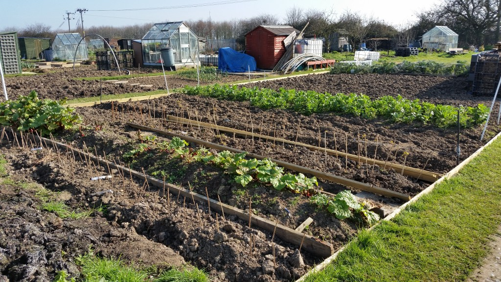morning on the allotment