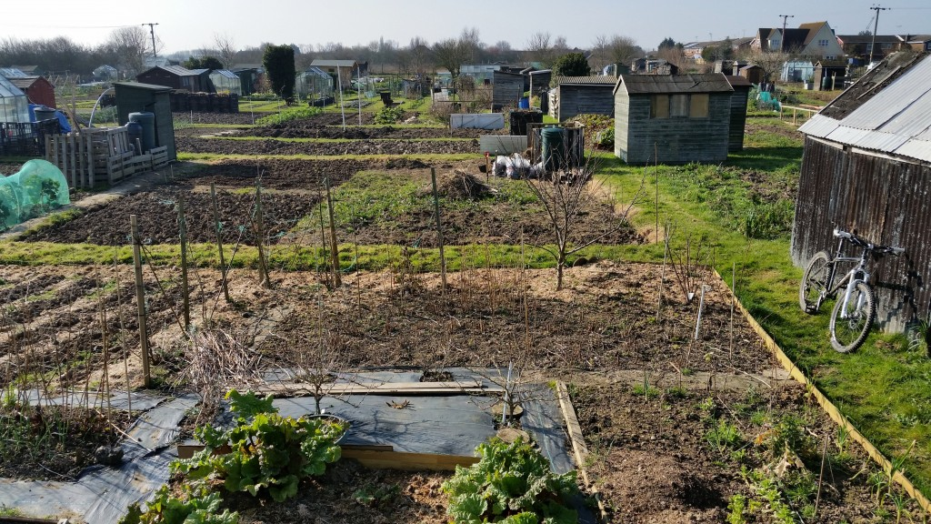perfect morning on the allotment