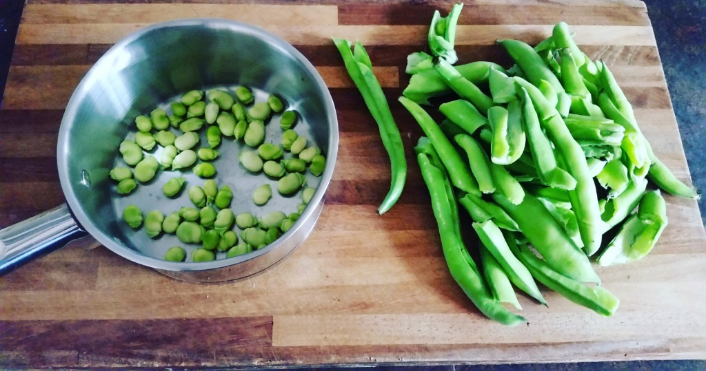 Problem With Broad Beans