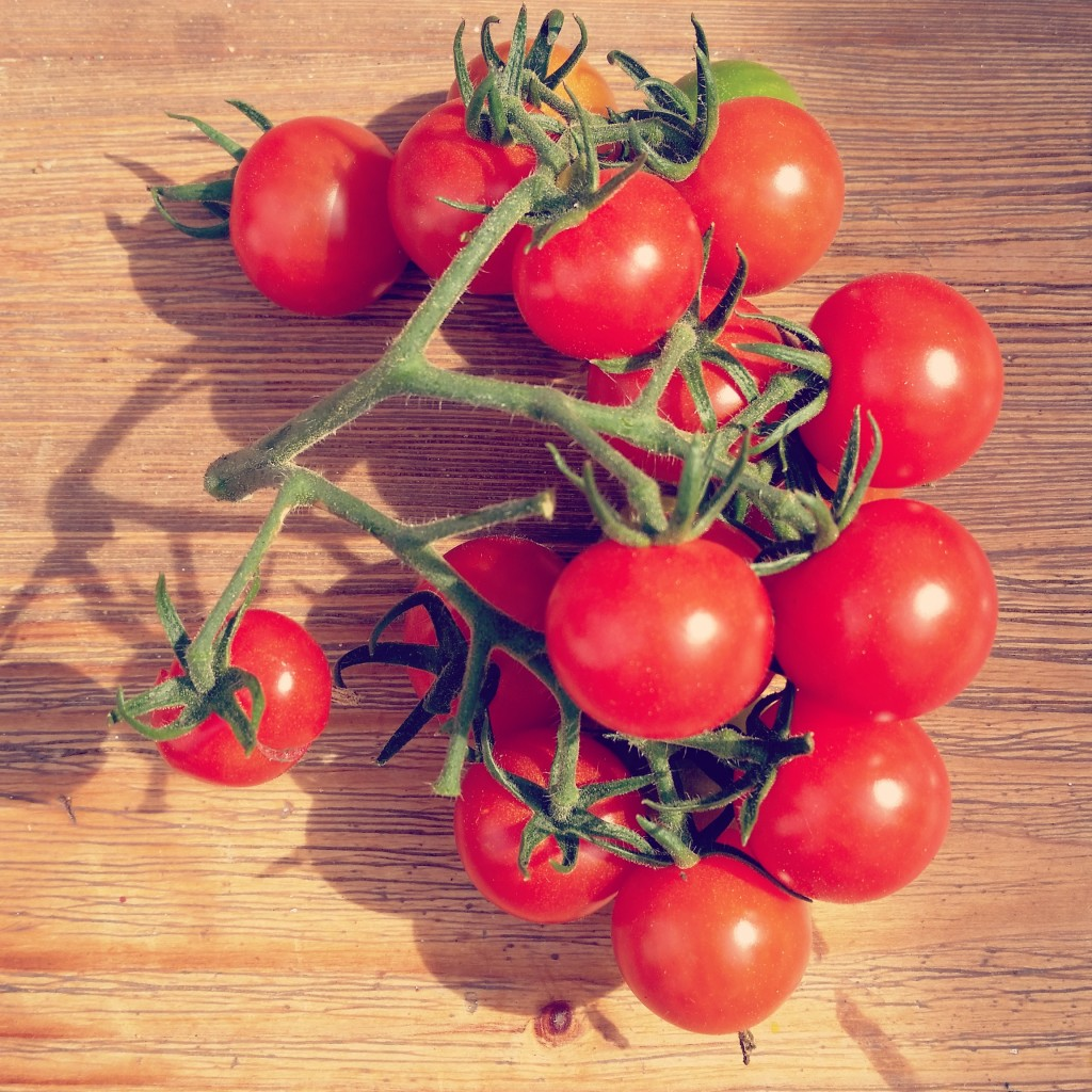 Tips for Extending Your Greenhouse Tomato Harvest