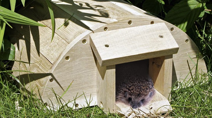 Hedgehog-house-720x400