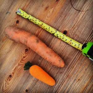 harvest time for maincrop carrots