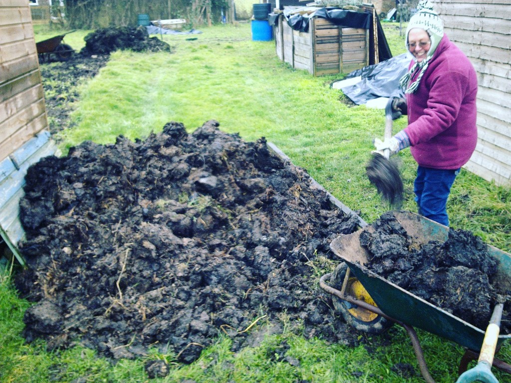 adding organic matter to your allotment