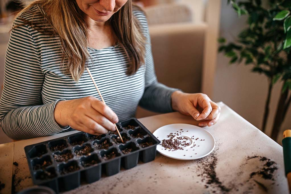 Woman-putting-seeds-in-a-tray-container-before-placing-on-a-seed-mat