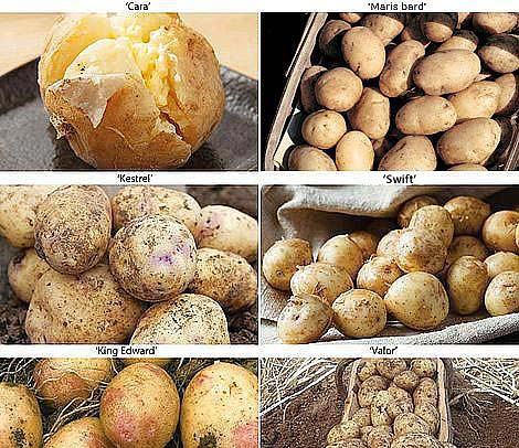 potato-allotment-favourites-collection