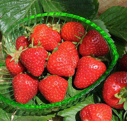 lovely-Malling-Centenary-strawberries