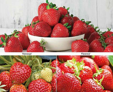 lovely-collection-of-strawberries-to-grow-at-home