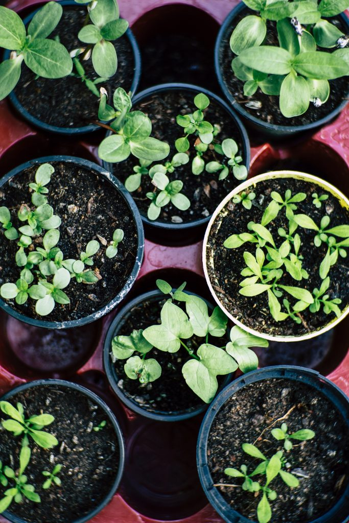 Vegetables That Grow Well in Pots